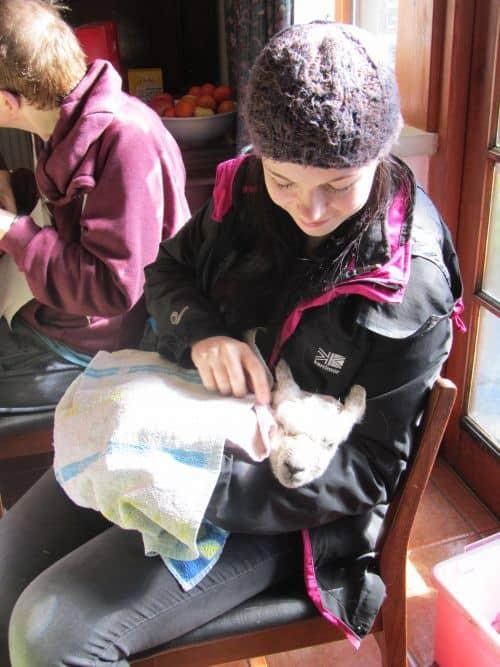 cushions,Orange Box,Mothers Day meal,Stumpwork sheep,Sue's lambs 113