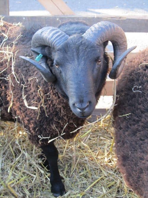Masham,G'wk Airedale,S'wk sheep, S'wk insects,rag rugging,mug sh 019